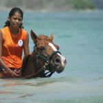 Courtesy Being with Horses