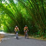 With no cars allowed, the bamboo cathedral in Chaguaramas' Tucker Valley is popular with cyclists, walkers, joggers and hikers. Photo by Stephen Broadbridge