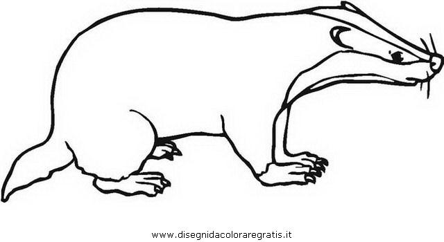 disegno tasso tassi badger 03 animali da colorare