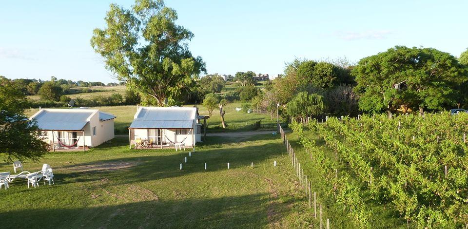 Victoria Entre Rios viñedos: Colinas de Baco