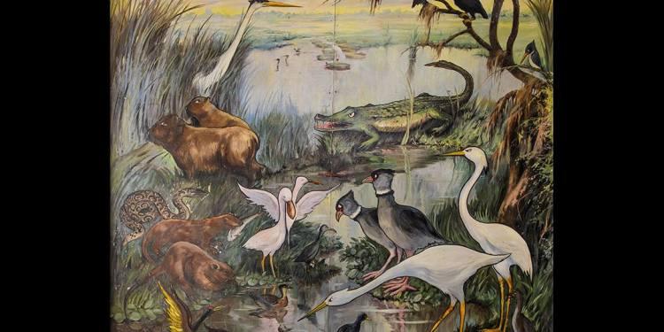 """Fauna acuática"""" - Óleo - Raúl Domínguez"""