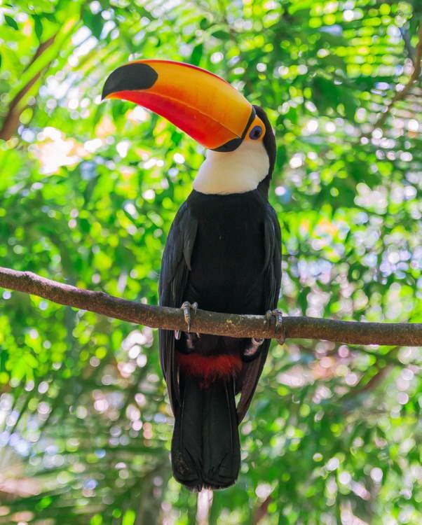 Parque Nacional Iguazú flora y fauna