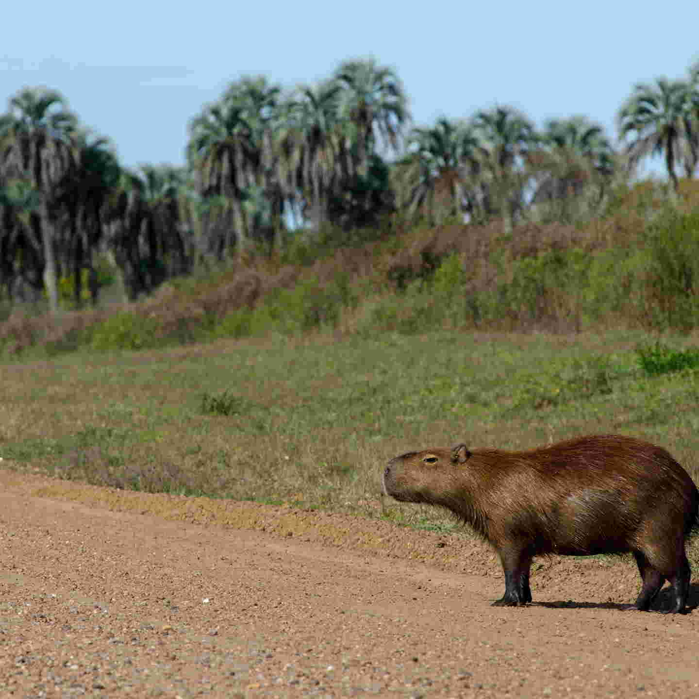 Parque Nacional El Palmar flora y fauna
