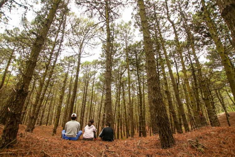 Bosque en Pinamar