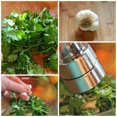 herbs garlic