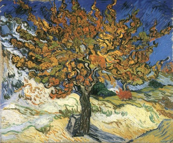Vincent Van Gogh's Mulberry Tree