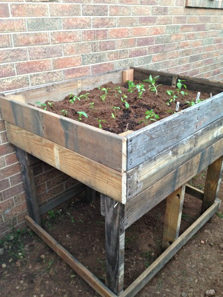 raised bed for peppers