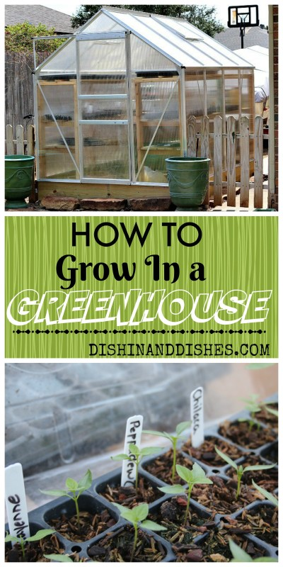 How to Plant in a Greenhouse - Dishin & Dishes