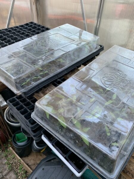 greenhouse seed tray lids