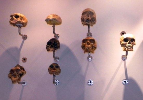 foto teschi museo civico di storia naturale di verona