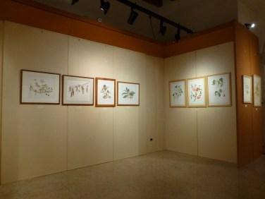 20121104-florapictamuseominiscalchierizzopittura-botanicaverona