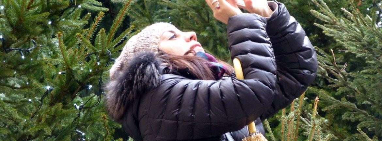fotografa a verona con sfondo di abeti natalizi