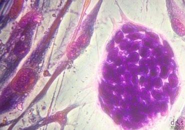 cellule staminali convegno a verona