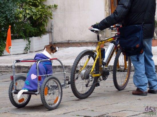 verona, bicicletta con carrellino per il cane