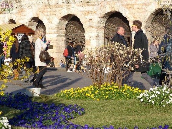 aiuole con violette davanti all'arena per verona in fiore 2013