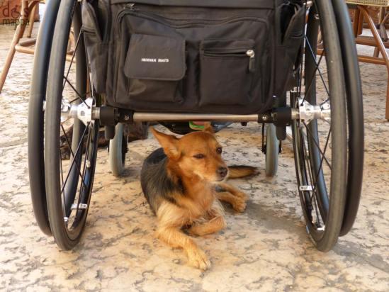 cane coco al riparo dal sole sotto la carrozzina