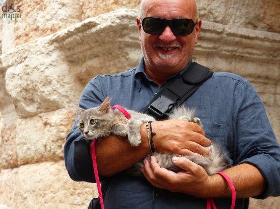 20130908-gatto-turista-arena-verona