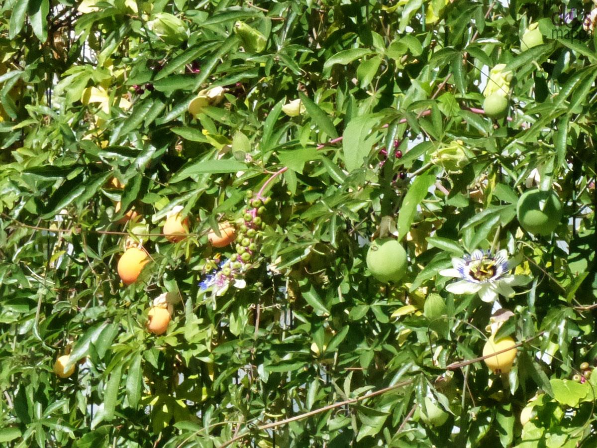20130920-fiori-frutto-passione-teatro-camploy-verona