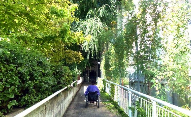 L'entrata accessibile ai disabili in carrozzina del Teatro Camploy è sul retro (nella piazzetta ci sono parcheggi riservati), dove è posta una lunga rampa. Lungo la rampa in settembre è possibile godere della fioritura dei fiori della passione.