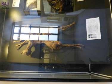 20130207 Museo di Storia Naturale Verona accessibile dismappa 803