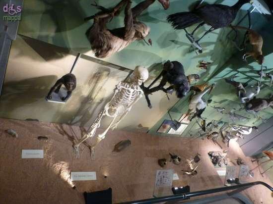 20130207 Museo di Storia Naturale Verona accessibile dismappa 844