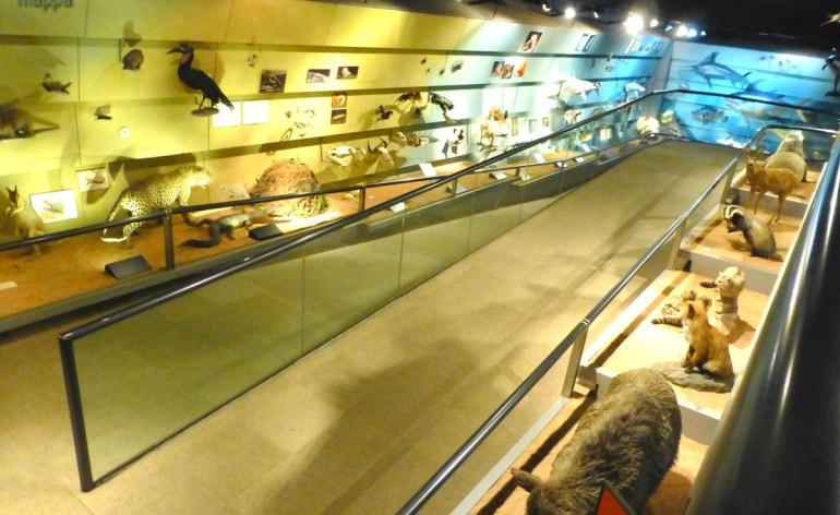 20130207 Rampa accessibile disabili museo storia naturale Verona