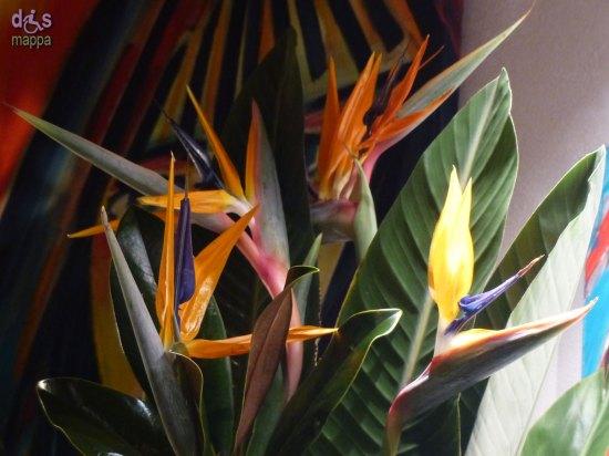 20140201 Strelitzia pianta uccello del paradiso Ai Piloti Verona