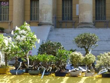 20140329 Verona in fiore Piazza Bra 33