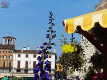 20140329 Verona in fiore Piazza Bra 39