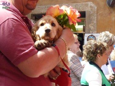 20140522 Benedizione rose Santa Rita Verona 02