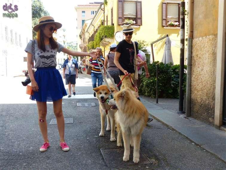 Coppia di turisti giapponesi a Verona con coppia di bellissimi cani Akita Inu