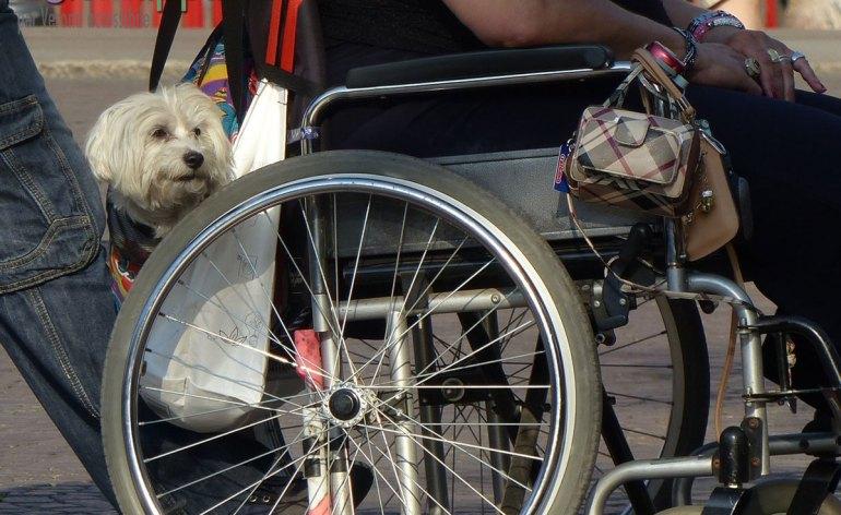 Cane portato in una borsa attaccata alla carrozzina di signora disabile in Piazza Bra a Verona