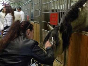 20150625 Cavalli White teatro equestre dismappa 683