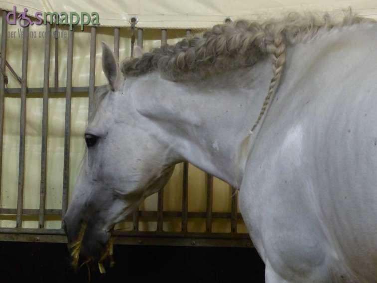20150625 Cavalli White teatro equestre dismappa 701