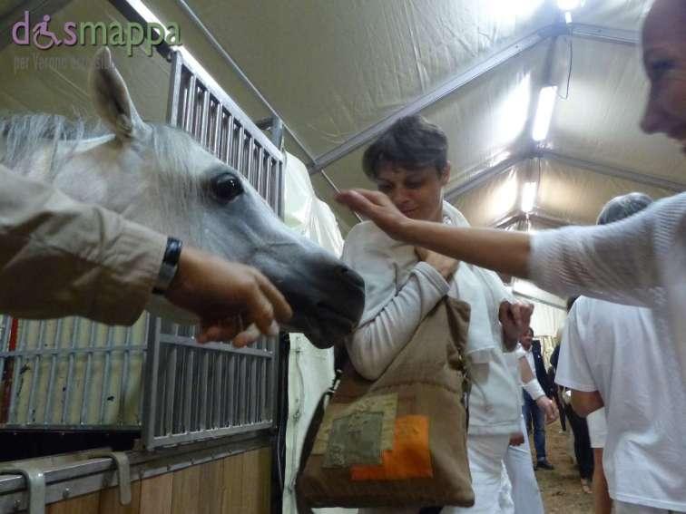 20150625 Cavalli White teatro equestre dismappa 709