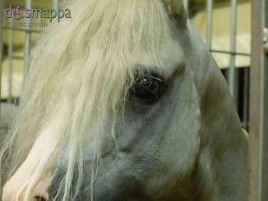 20150625 Cavalli White teatro equestre dismappa 729