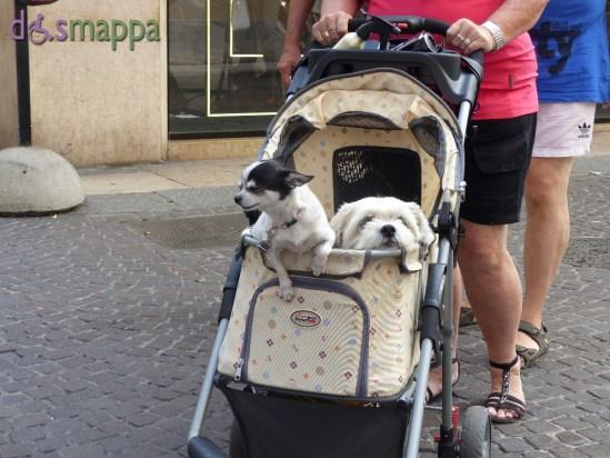 20150920 Cani carrozzina Verona dismappa