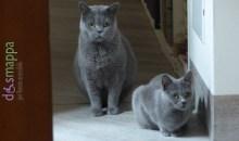 I gatti più belli del mondo 2017