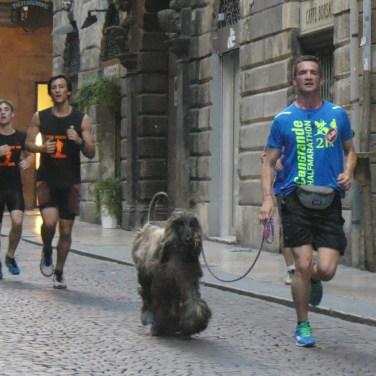 20160513 Run530 Verona corsa Casa disMappa 887