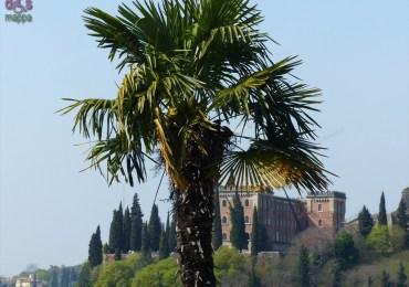 20140331 Verona dismappa 224
