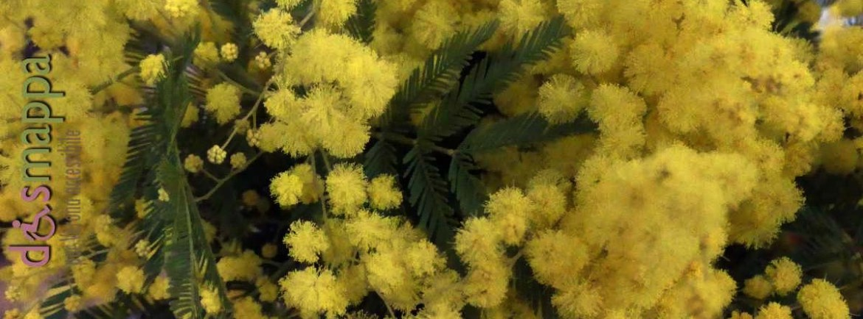 20170301 Mimose festa donna dismappa 13