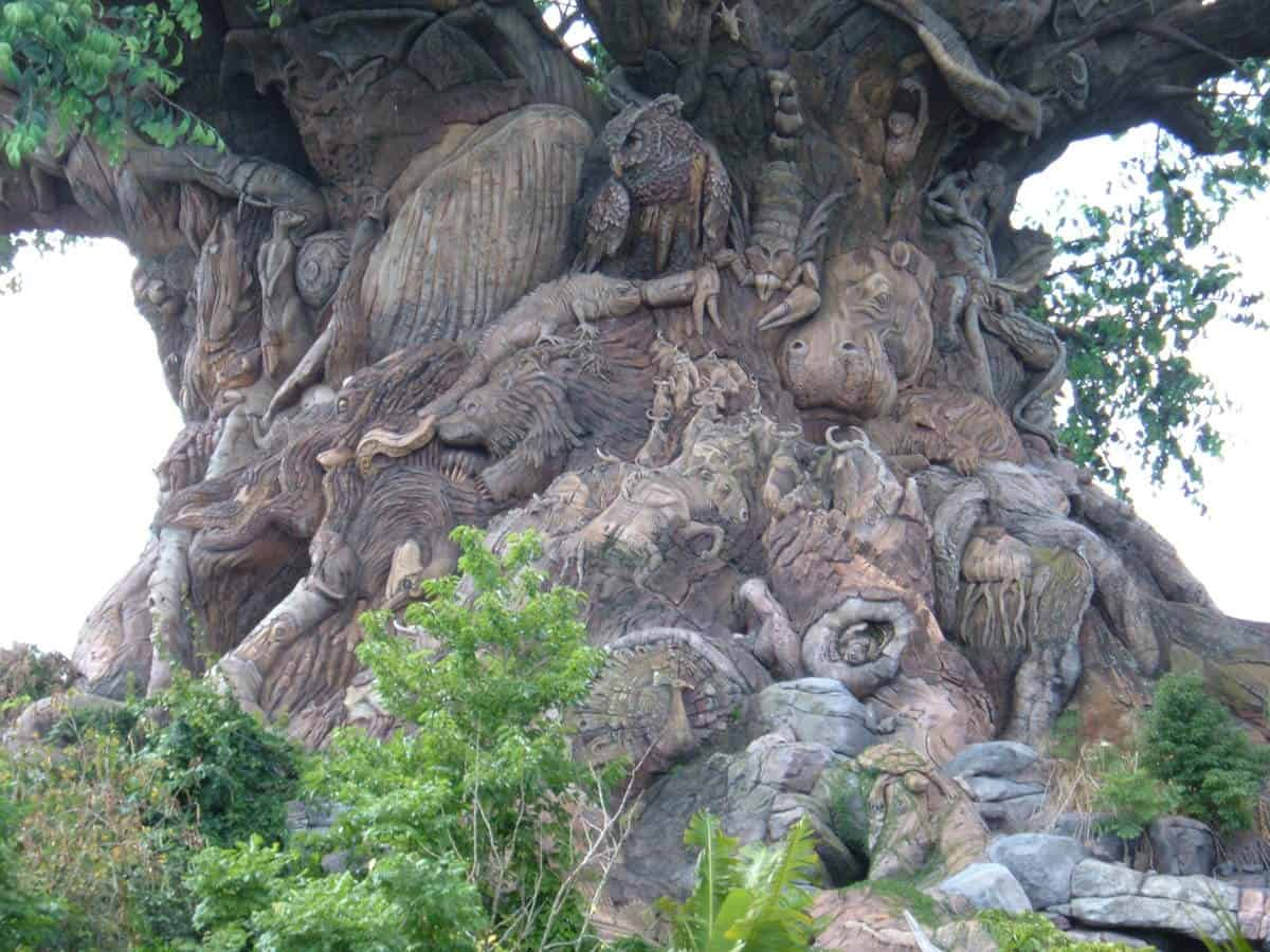 7 Amazing Facts About Animal Kingdom S Tree Of Life