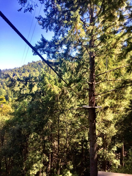 Sonoma Canopy Tours Northern CA Sonoma County Zipline