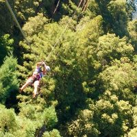 Why Walk When You Can Fly-Ziplining With Sonoma Canopy Tours