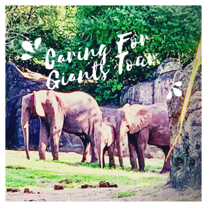 Caring For Giants Tours At Disney's Animal Kingdom -The Perfect Holiday Gift #DisneyAnimals #CaringForGiants
