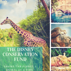 A Close Up Look At The Disney Conservation Fund- Saving The Planet 1 Animal At A Time
