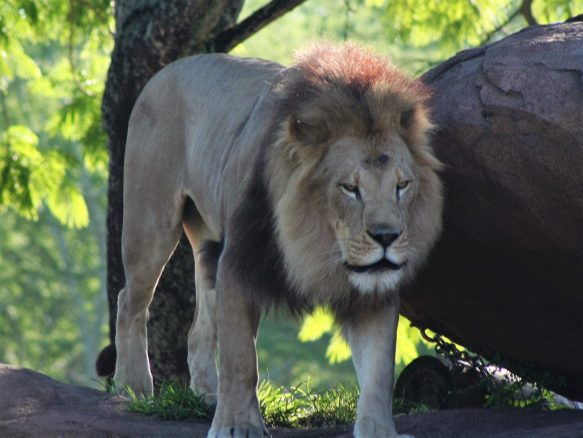 Animal Kingdom bucket list - Disney in your Day
