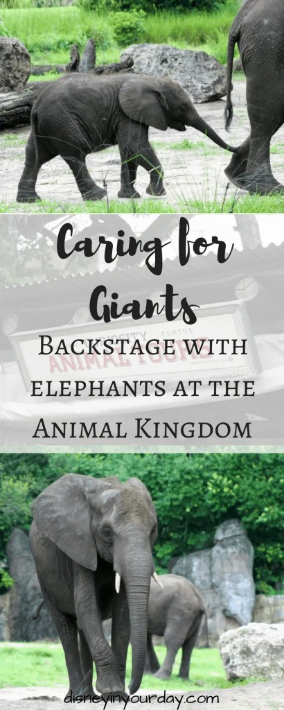 Caring for Giants tour - Disney in your Day
