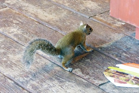 Random squirrel at Epcot World Showcase