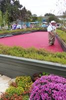 Epcot Food & Wine Festival 2015 - Ocean Spray Cranberry Bog